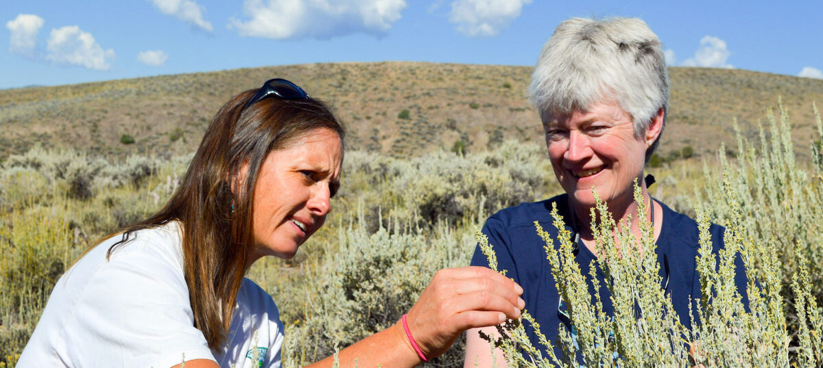 Western's MEM program helps start ecological restoration in Gunnison Valley