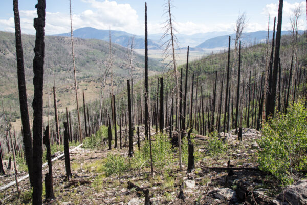 Research Shows Increased Wildfire Risk & Long-Term Ecological Change
