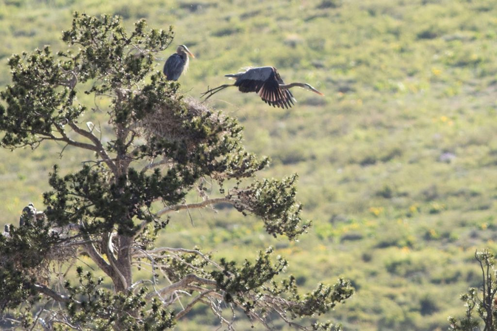 blue heron policy