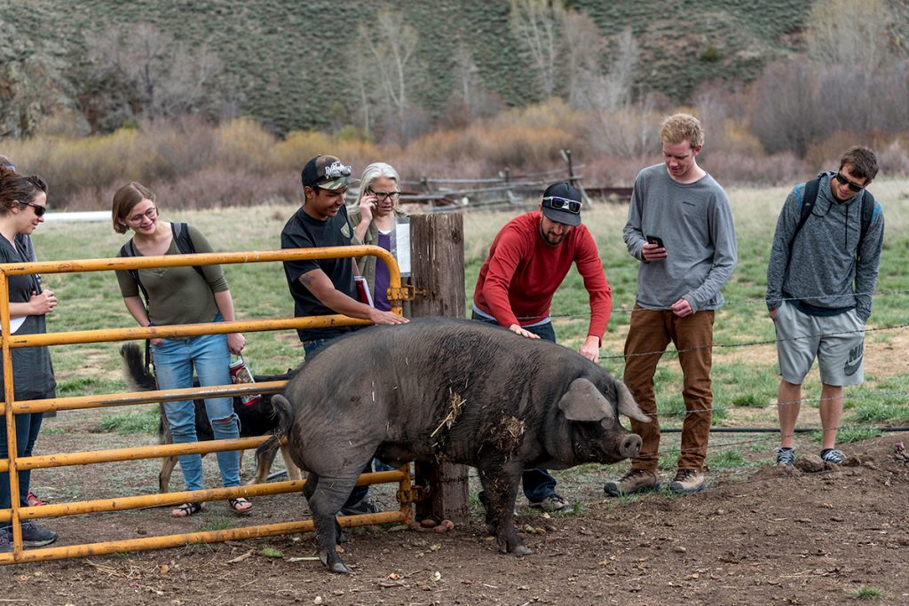 students with pig on farm